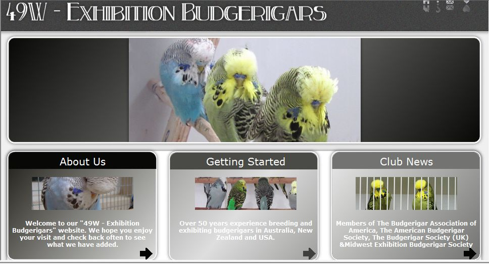 49W Exhibition Budgerigars